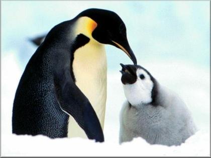 pinguinos.jpg